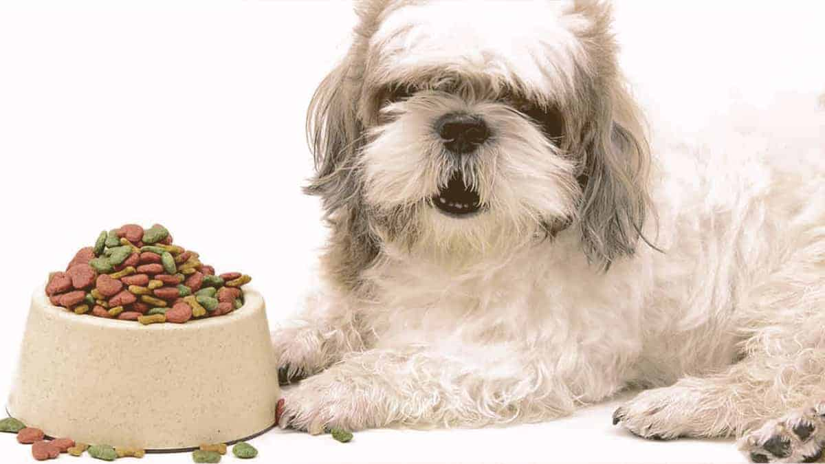 furry dog next to a bowl full of food