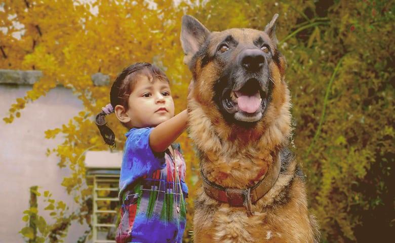 little girl with German Shepherd Dog on alert
