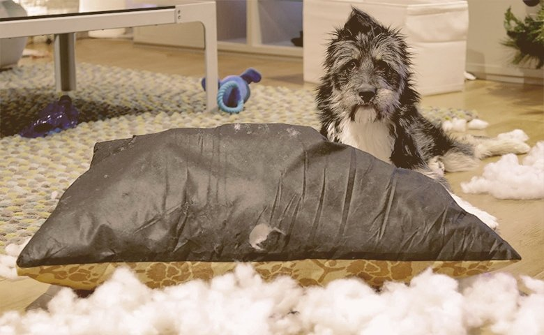 A Note about Dog Beds and Chewing