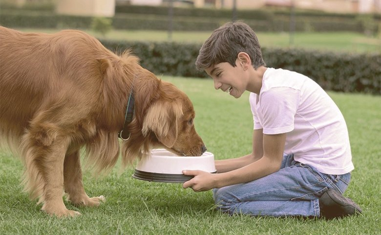 kid giving food to the dog