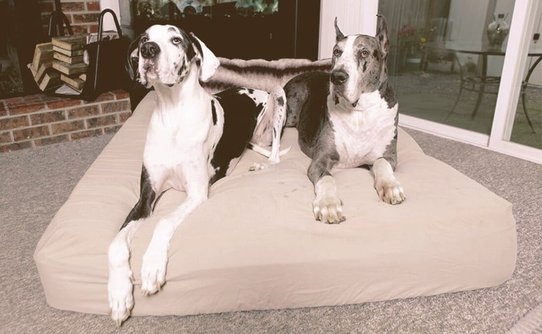2 Great Danes laying on their bed