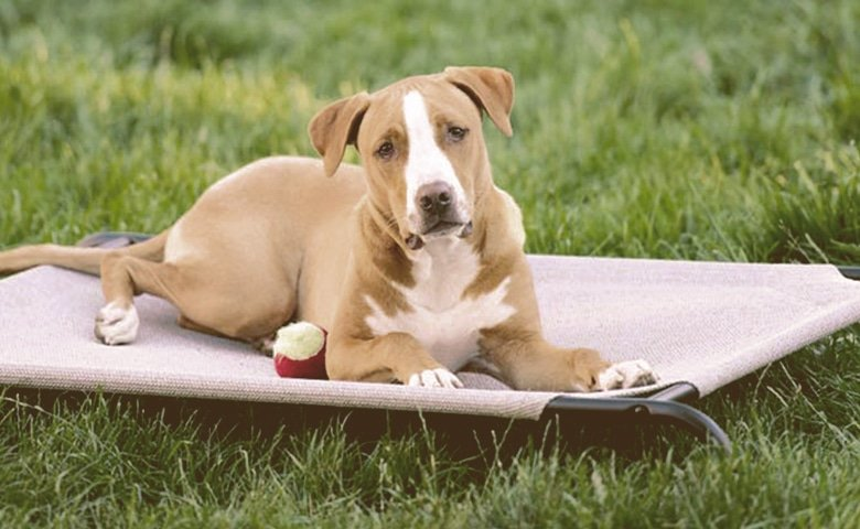dog cooling down on a mat on the grass