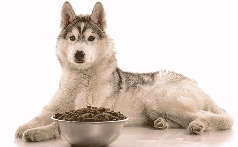 husky laying down with a bowl of food in front