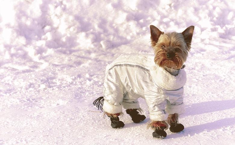 Dog Winter Gear