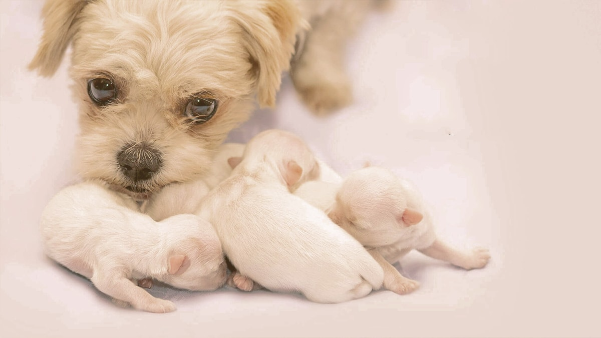 mon with puppies