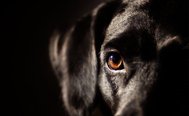 black dog afraid of the dark