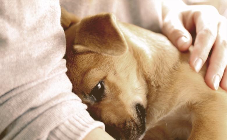 cuddle pupy