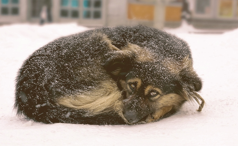 dog curled to get warm on the snow