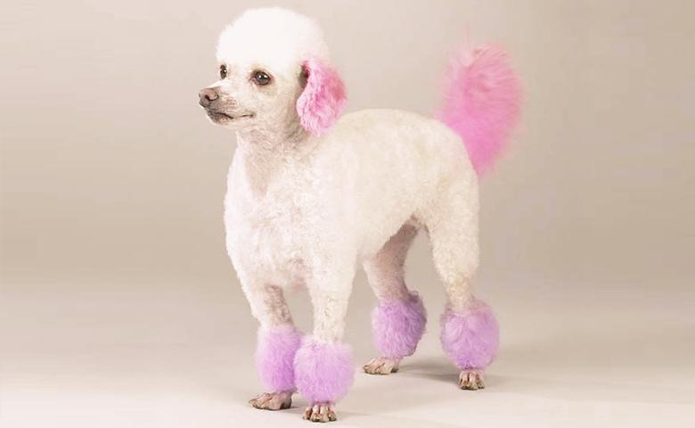 dog dyed pink
