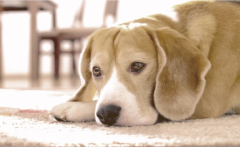 dog laying down on the floor