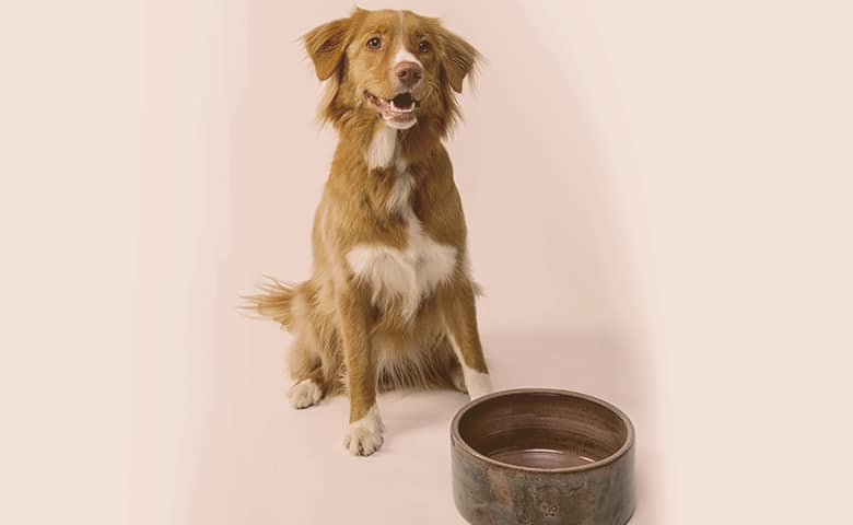 dog next to his ceramic bowl