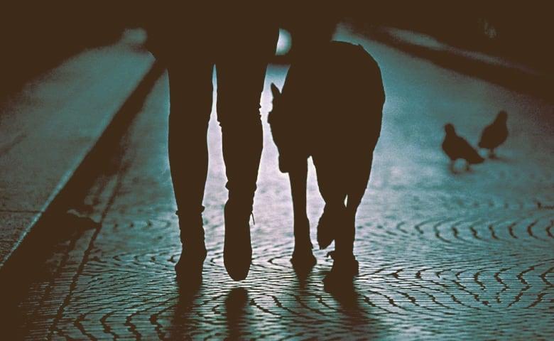 dog night walk