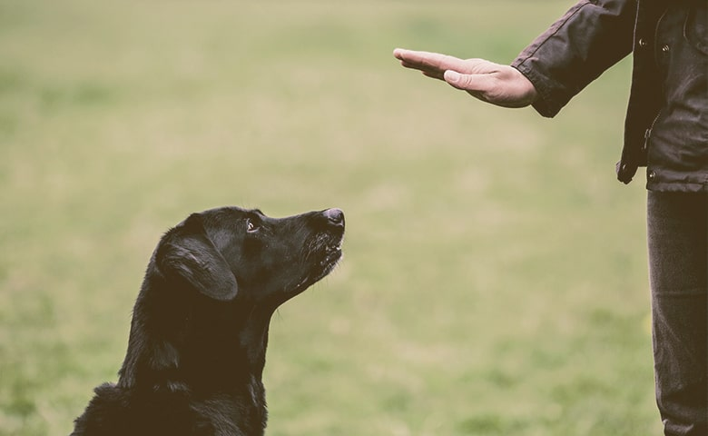 dog trainer giving a hand command