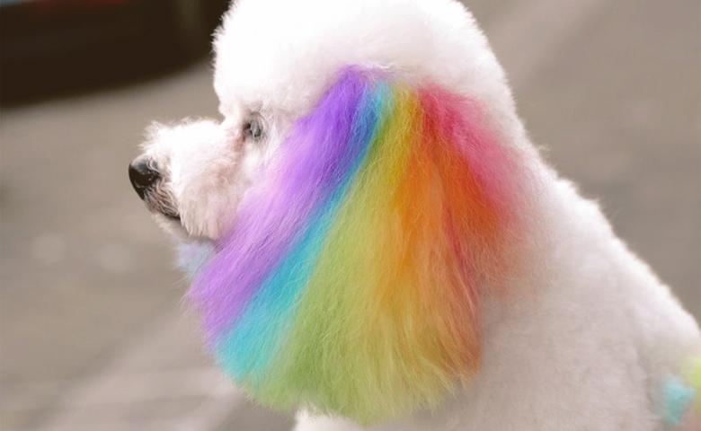 dog with rainbow color ears