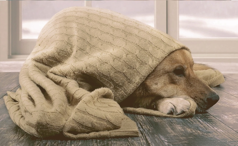 dog wrapped in blankets on the floor