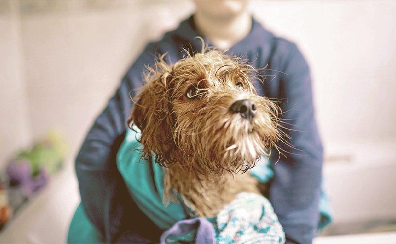 giving dog a bath