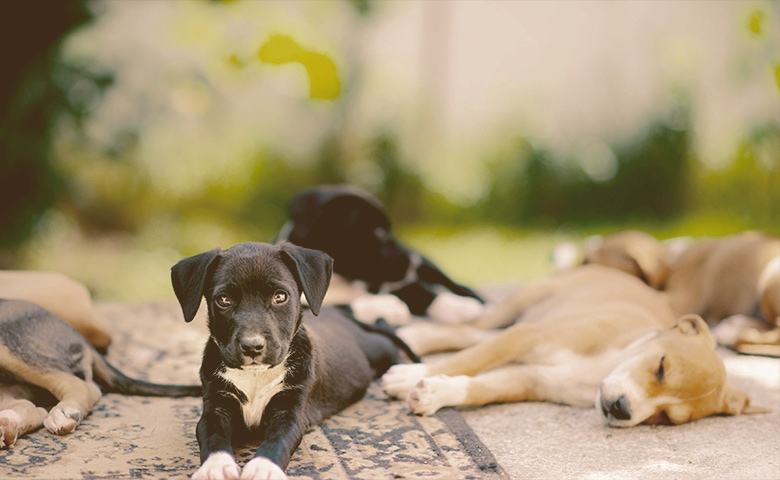 puppys relaxing outdoors