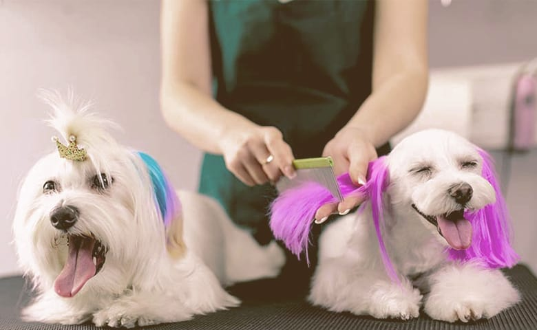 Dog Fur Dye professional taking of two dogs