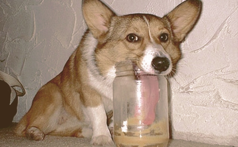 dog eating peanut butter from jar