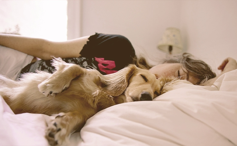 dog sleeping in bed with his human