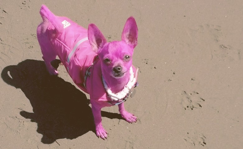 pink dog on the sand