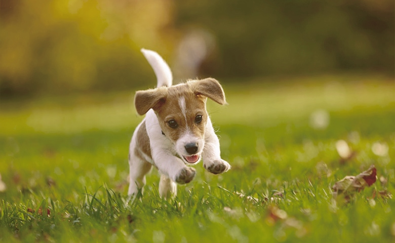 puppy playing on the grass