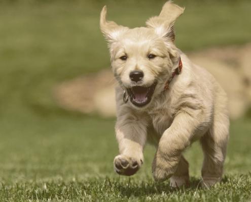 dog running on the grass