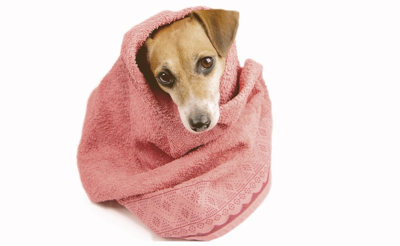 drying dog after bath