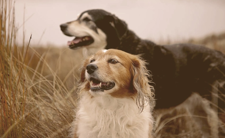 two dogs on the field