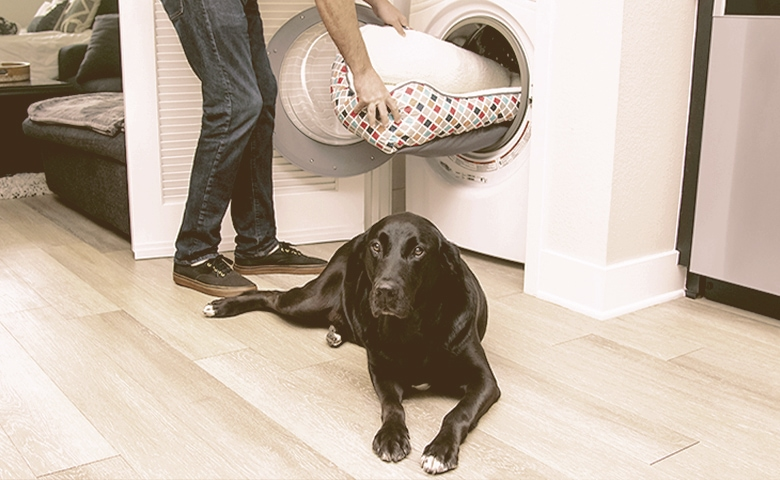 cleaning dog bed