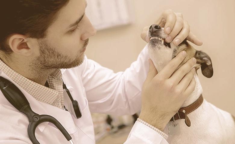 dental check by vet