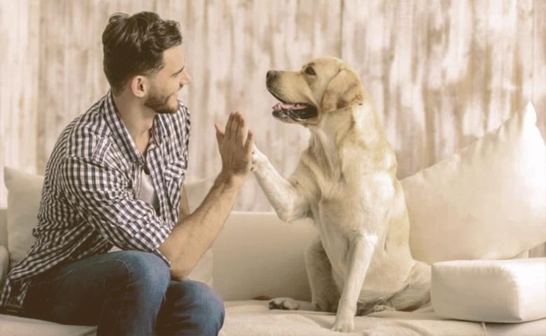 dog and onwer high five