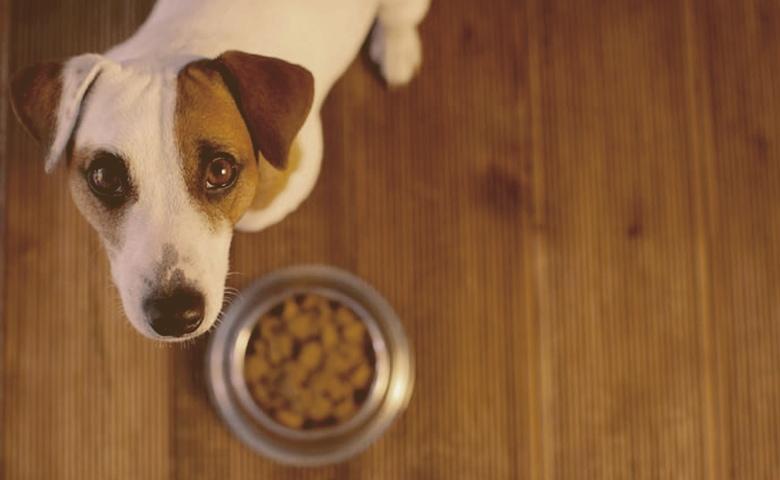 dog next to a food bowl