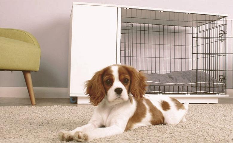 dog outside dog crate