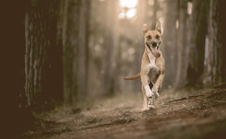 dog running wild