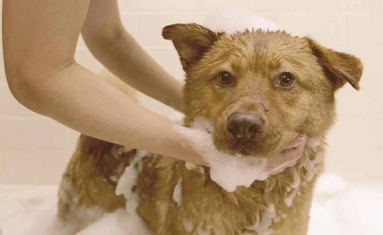 dog taking bath