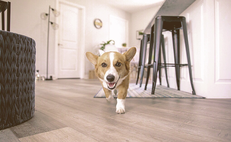 dog walking in the house