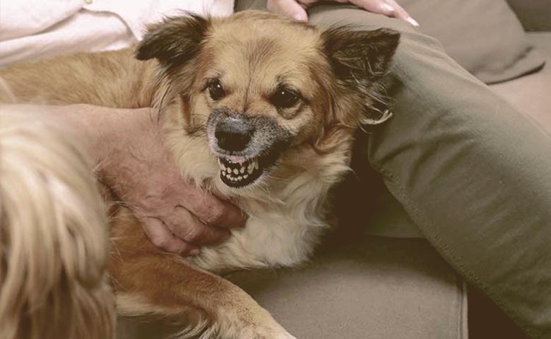 dog with protective behavior
