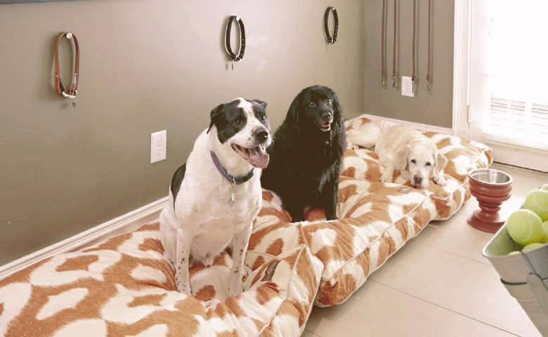 dogs in their dog room