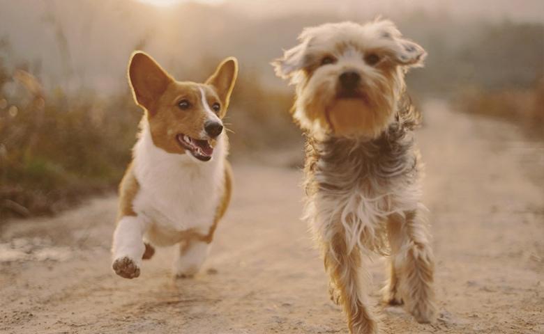 dogs running wild