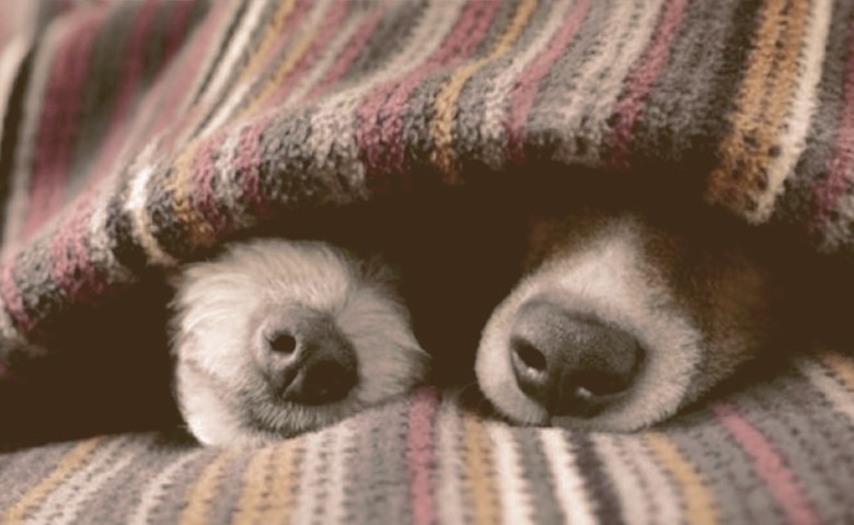 dogs under a blanket