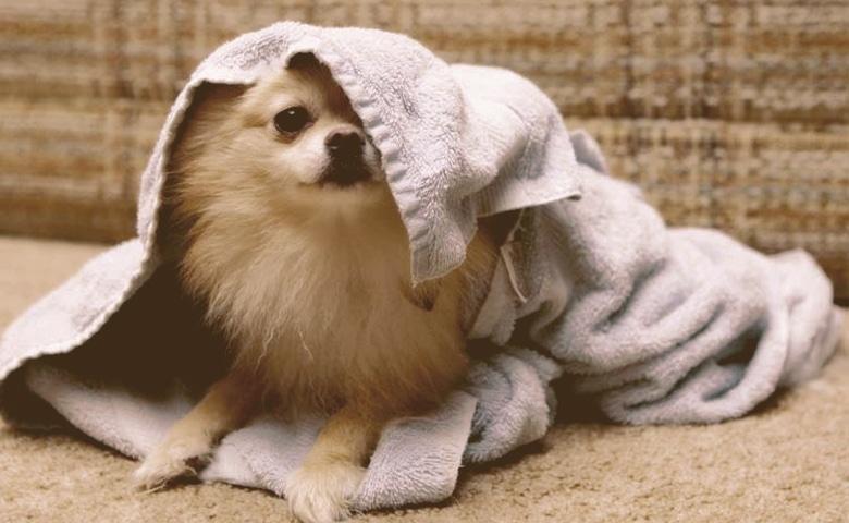 Dog Dry Bath