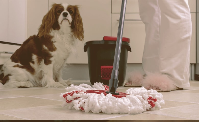mop with dog watching