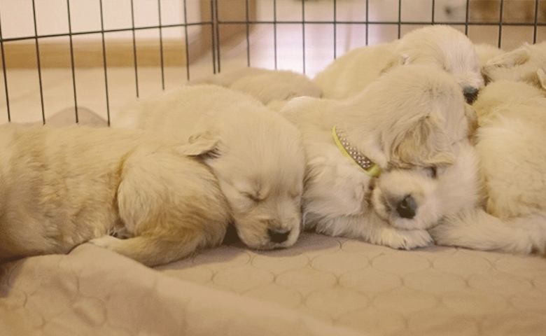 puppies sleeping in a crate
