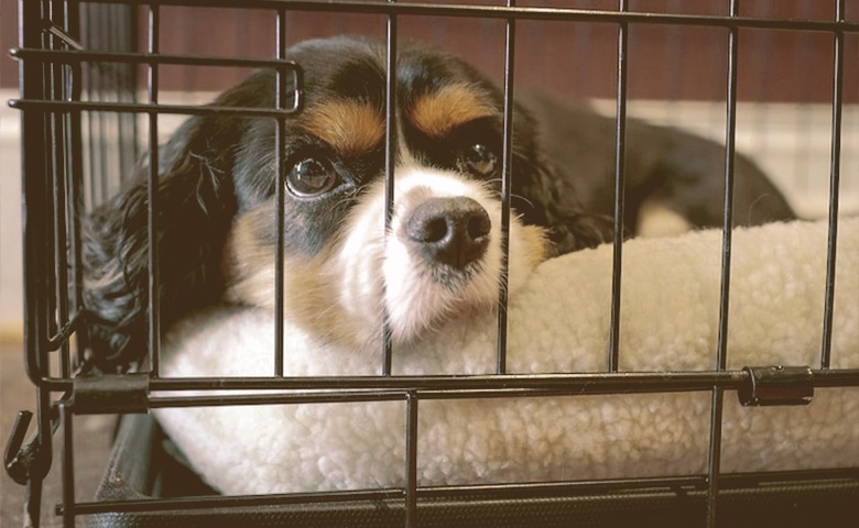 puppy in a crate