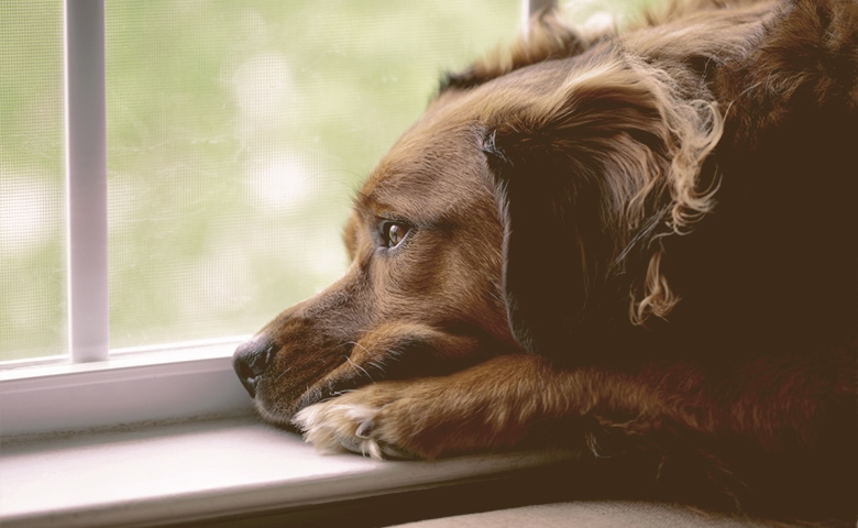 Dog looking out of the window