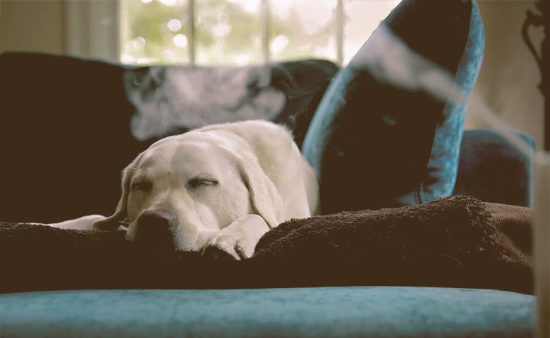 Dog sleaping on the sofa