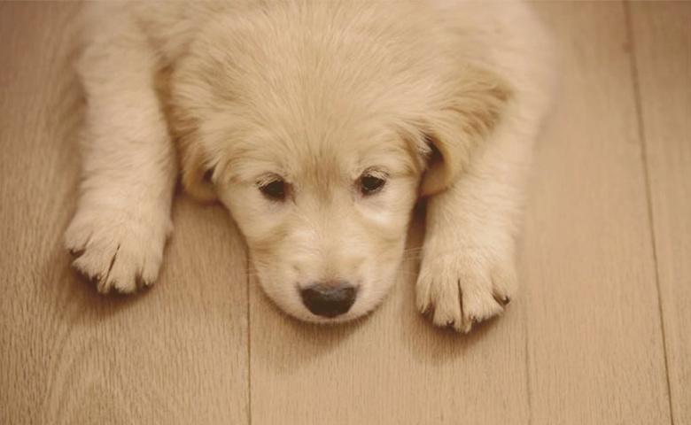 Puppy on the Floor