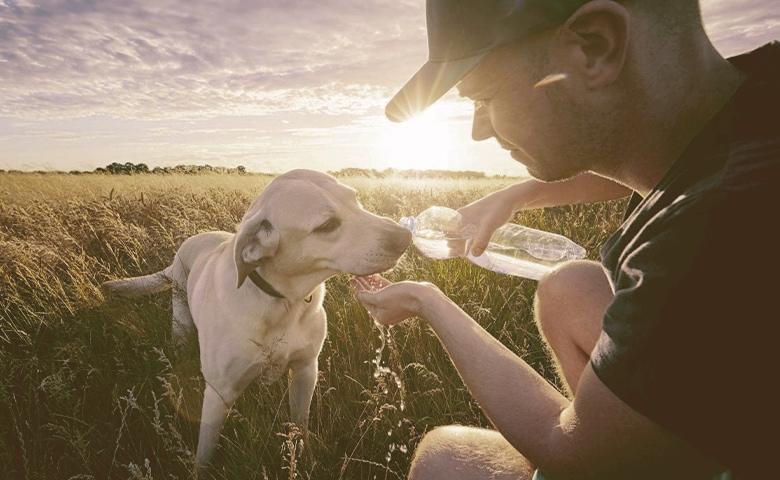 Rehydrate Dog
