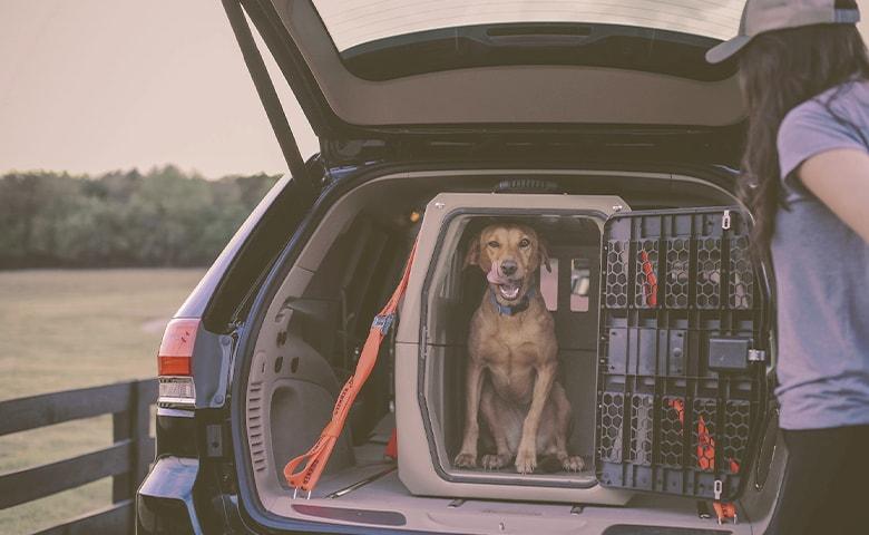 dog in a car crate